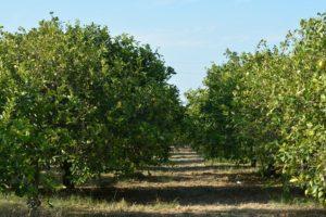 Visita dell'orto biologico - Agriturismo Le Zagare di Vendicari Noto